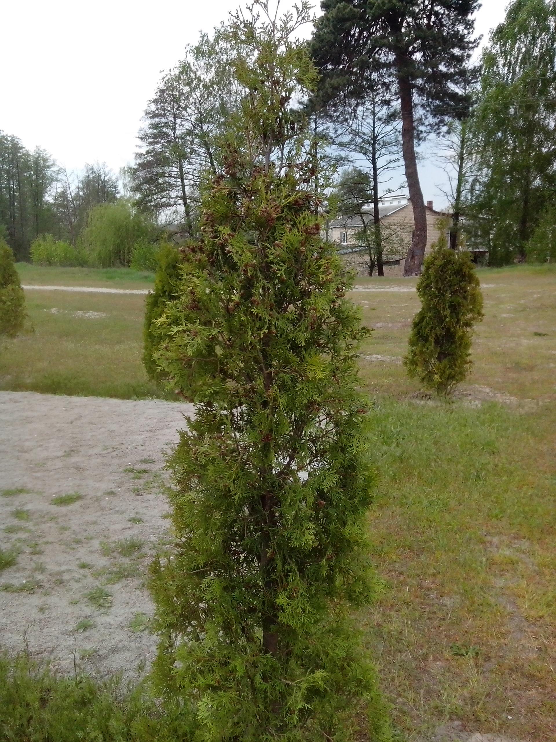 Нові деревця